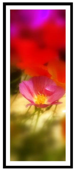 creation photo fleurs-copie-1