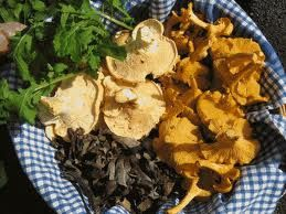 OREGON-Wild-mushrooms-copie-1.jpg