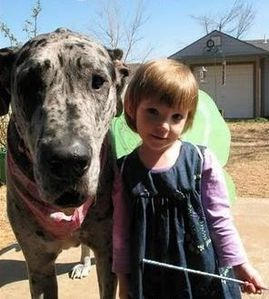 grand chien