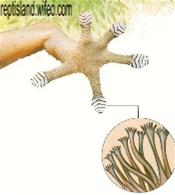 gecko-copie-1.png