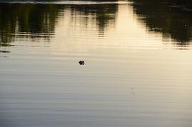 Kakadu-NP---Yellow-Water-Region---01.07.11---02.07.11---35.JPG