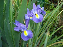 mon jardin au printemps 006-copie-1