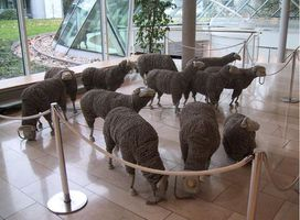 moutons PTT3