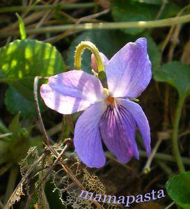 violette-copie-1.jpg