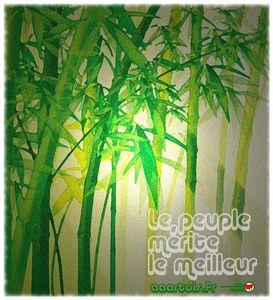AAArtois meilleur bamboo