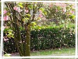 arbre-en-fleurs.jpg