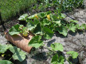 De dr les de choses poussent dans notre jardin le for Amenagement jardin 66