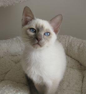 chatons-octobre2012-3422.JPG