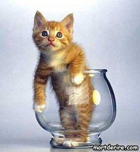 Image De Chat Rigolo chat rigolo - nicole-animaux.over-blog