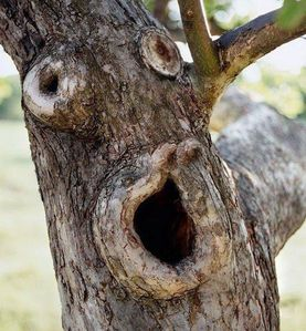 oooh surprised-tree