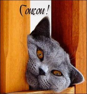 coucou-chat3