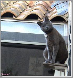NANA sur les toits episode 1''