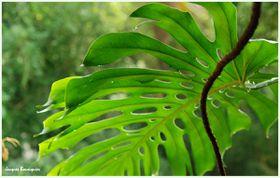 Grandes serres jardin des plantes 5