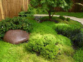 Jardin Japonais Azalée, pierre & Helxine