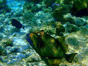 Faune-maldives-2.jpg