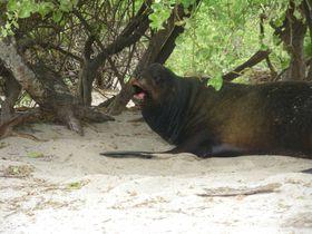 Galapagos-EQUATEUR
