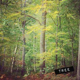 27 Tree