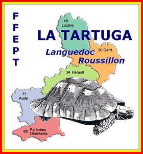 La tartuga LR or&R