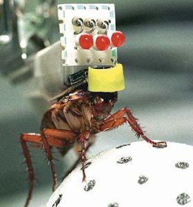 insecte-espion.jpg