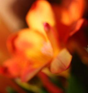 Fleurs-oranges.jpg