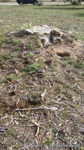 Ou trouver des morilles - natures paul keirn (08)