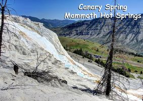 MT - Canary Spring