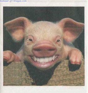 cochon-rire.jpg