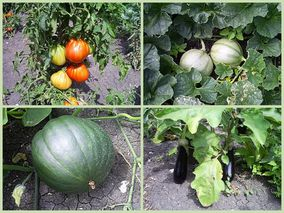 photos potager