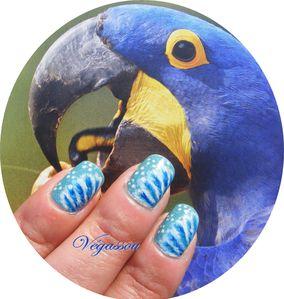 perroquets--2-.JPG