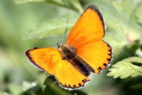 Fleurs-et-Papillons 7621