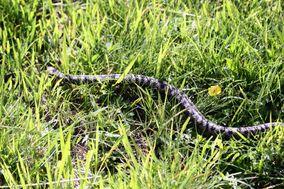 Reptiles 6634