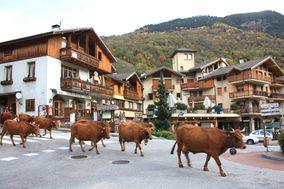 Vaches-tarines 7951 1 1