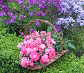 panier all pink roses