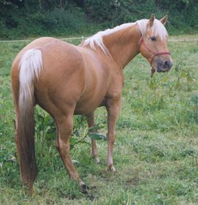 Quarter-Horse-Honey.jpg