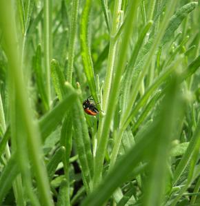 jardin-briis-2012-39--Alvina-Nail.png