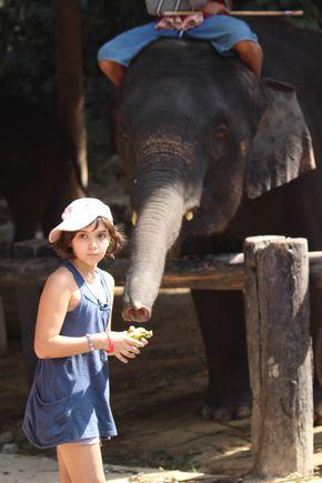 002-Elephant (10)