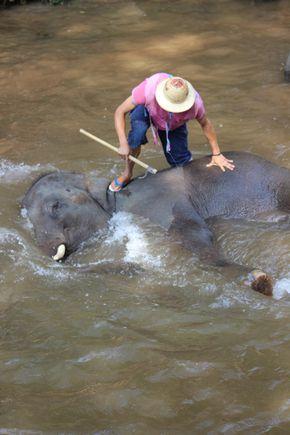 002-Elephant (13)