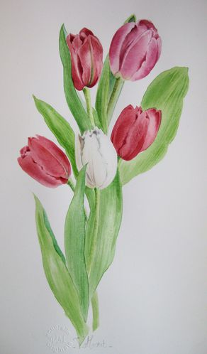 Tulipes-a-V-MORET.jpg