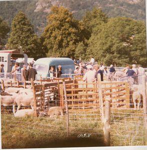 au-foirail-mouton.jpg