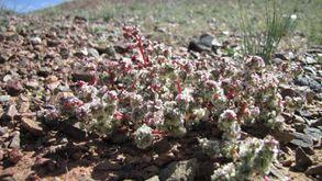 Desert de Gobi (87)