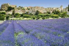 luberon-Navi-mag-location-village-et-lavande.jpg