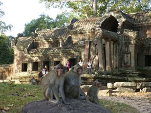 Temple d'Angkor (43)