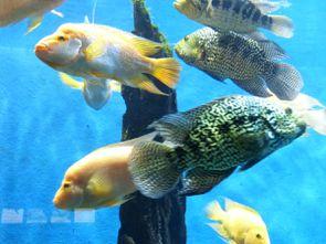 Aquarium (24)