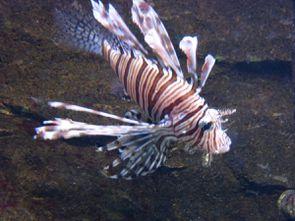 Aquarium (34)