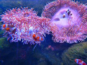 Aquarium (45)