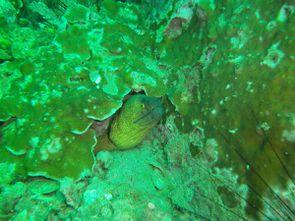 Koh Lipe - Snorkeling (05)