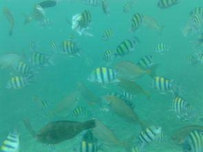 Snorkeling (5)