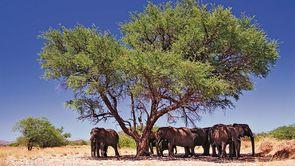 Elephants-en-Namibie.jpg