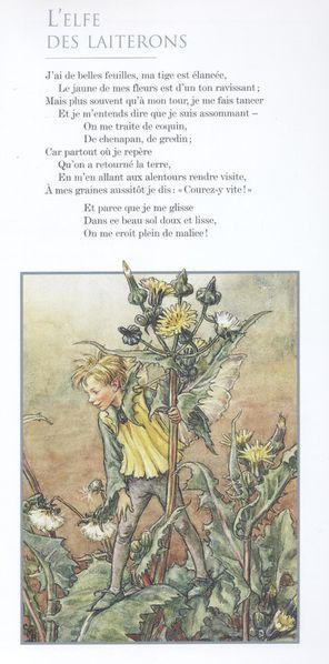 L'elfe des laiterons