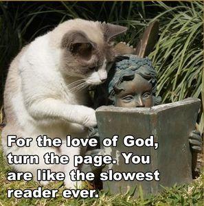 reading-cat.jpg